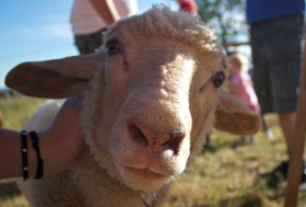 Ein Schaf. :-)